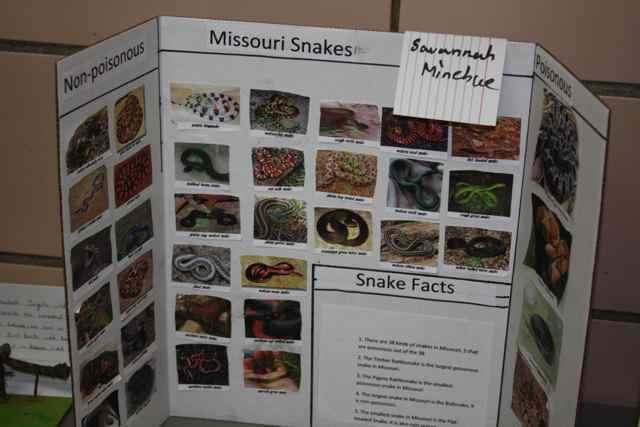 Missouri snakes